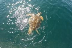 Avvistamento tartaruga